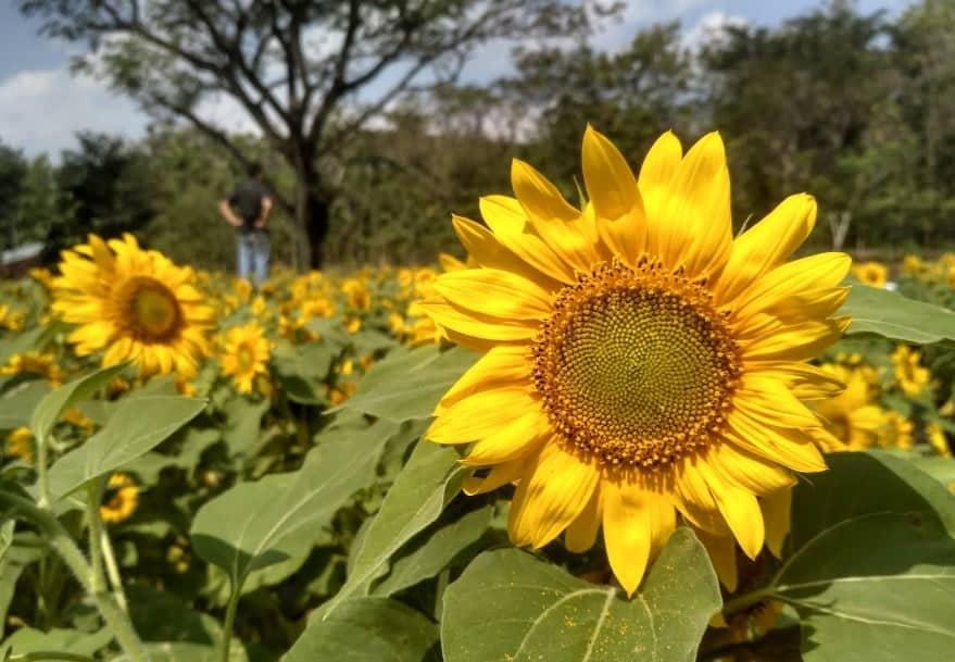 Taman Bunga Nawari, Bejiharjo