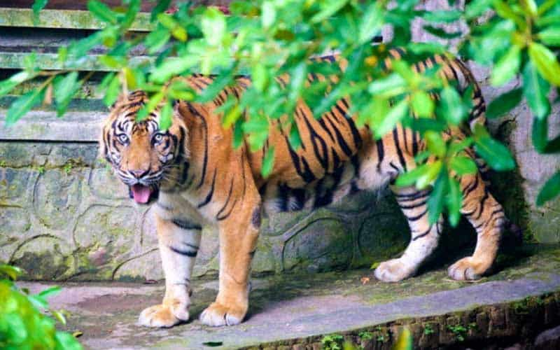 Lokasi Wisata Kebun Binatang Gembira Loka