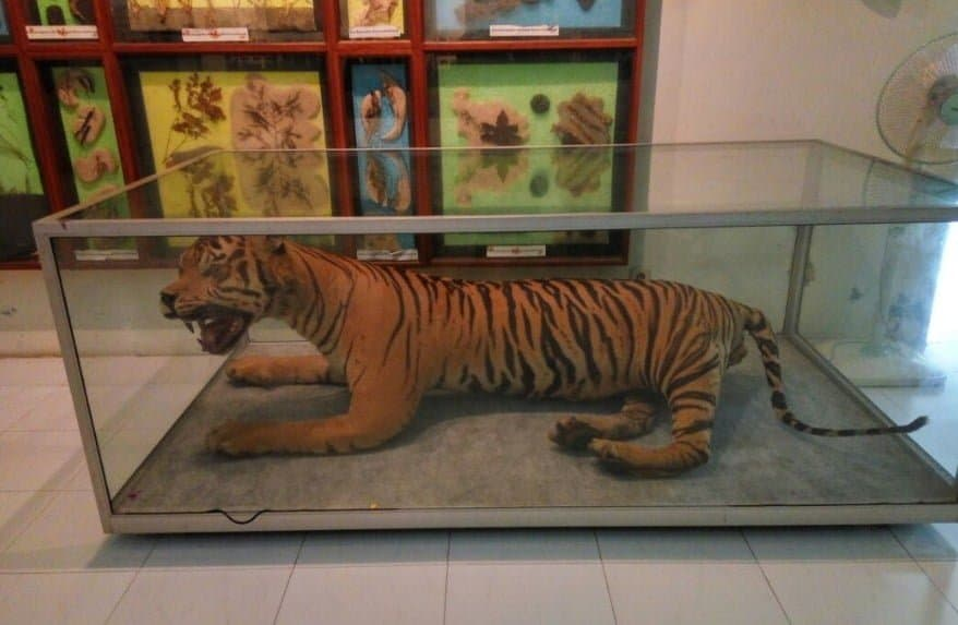 Museum Zoo