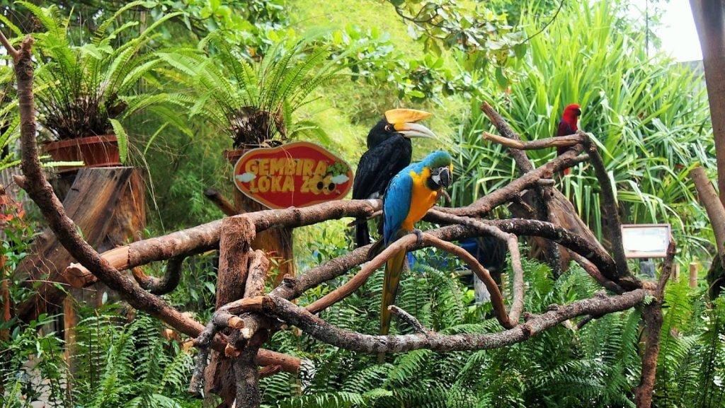 Sejarah Kebun Binatang (Bonbin) Gembira Loka Jogja